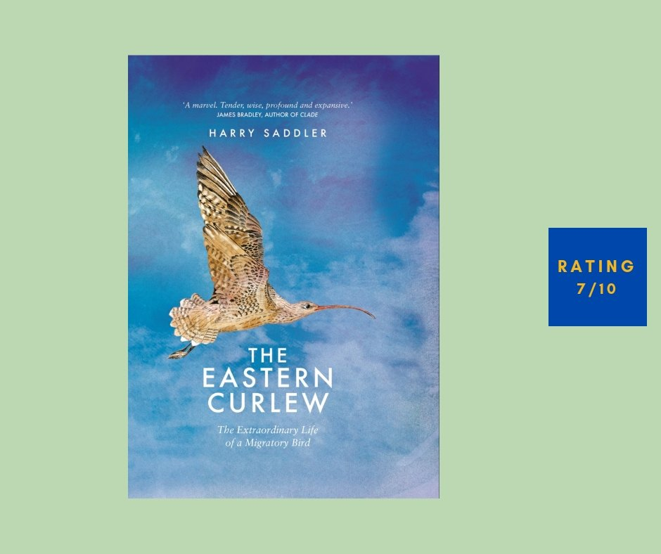 Harry Saddler Curlew review