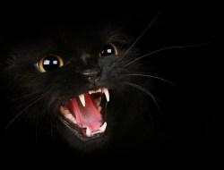Кошачьи сверхспособности. Чтобы видеть, домашним кошкам нужно в 6 раз меньше света, чем людям. Когда мы видим темноту, они видят всё. Также кошки обладают превосходным слухом, лучшим, чем у собак. Они различают звуки до 85000 Гц. Кошачье обоняние в 14 раз превосходит наше, своим носом они изучают всё самое интересное.