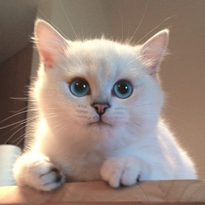 cat-colby-04