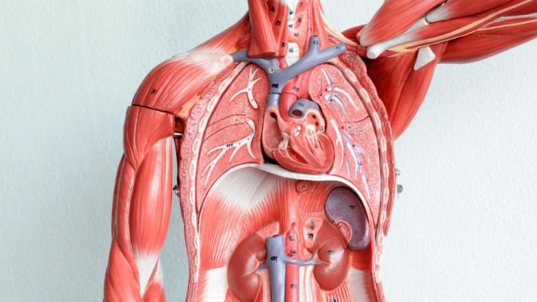 human-tissue