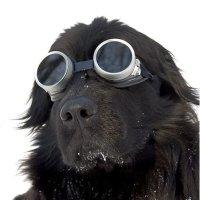 Интересные факты о собаках-спасателях