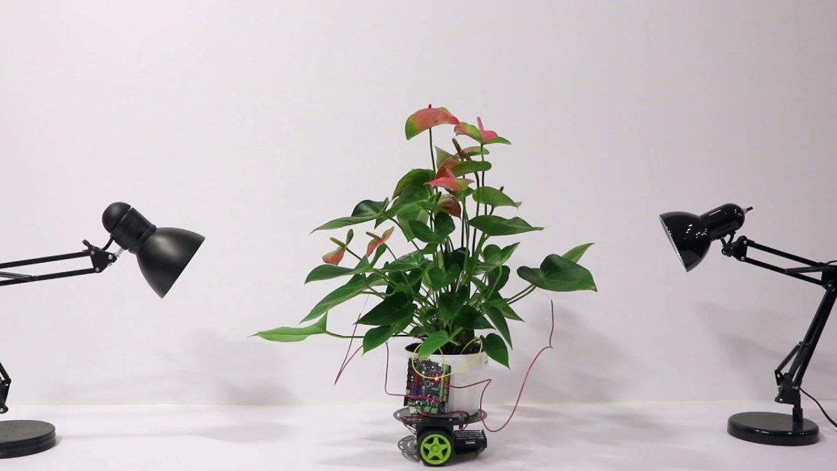 Elowan — гибрид растения и робота