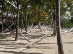 Yes, a sea of hammocks!