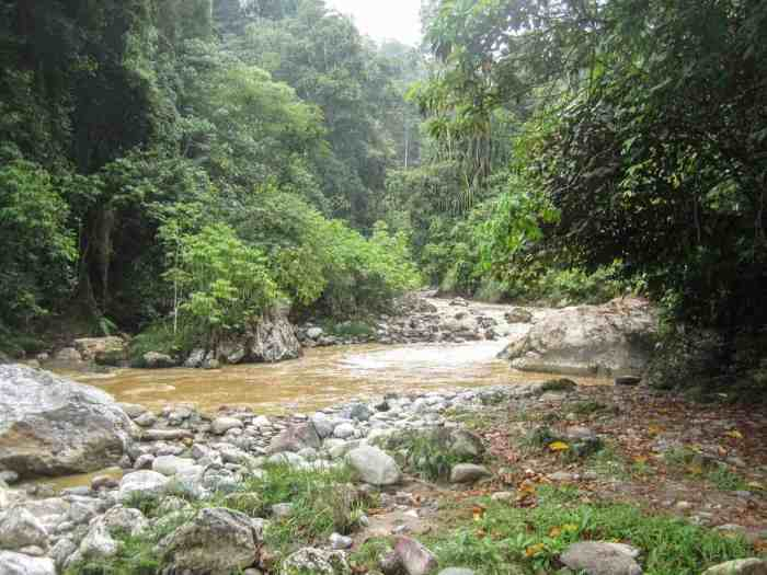 Observing Orangutans in Sumatra - don't go to Bukit Lawang!