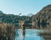 Bathing lakes Allgäu - Freibergsee