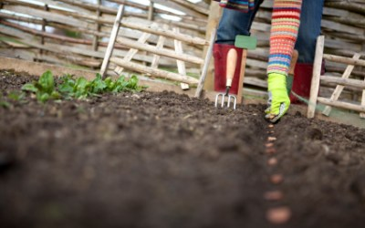 Survival Food Series: 25 Survival Seeds You Need For Your Garden