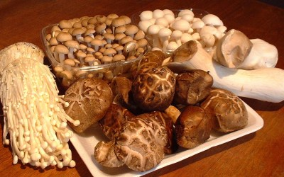 To Your Health Series: How Medicinal Mushrooms Can Benefit Your Immune System