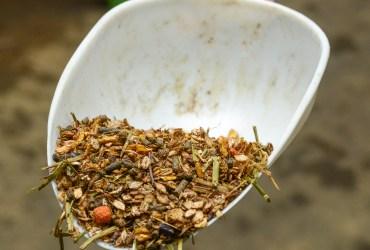 What to Feed Your Micro-Livestock