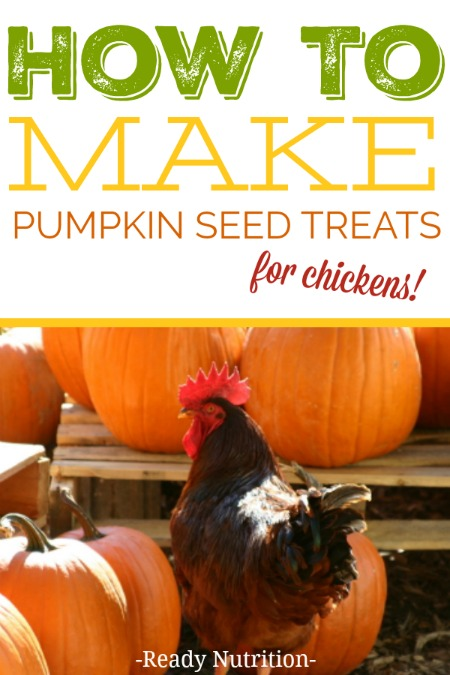 Chickens love, love, love pumpkin seeds and they are good for their health! Here is a quick chicken treat you can make for your flock.