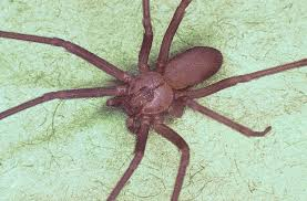 Identifying and Treating Spider Bites