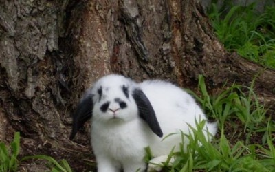 Rabbits As A Survival Food Source