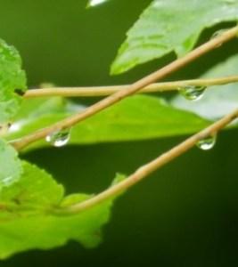 raindrop-sm-300x336