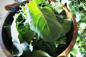 Foraging Edible Weeds in Urban Food Deserts