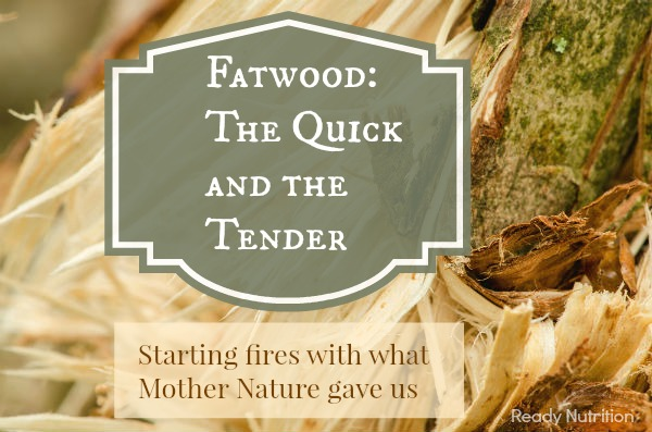 fatwood1
