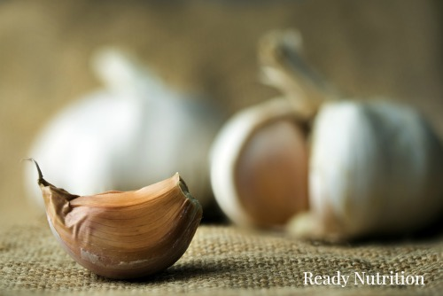 Growing your own supply of fresh garlic guarantees a constant supply of natural medicine and natural antibiotics. #ReadyNutrition