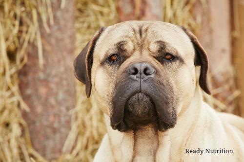 guard dog1