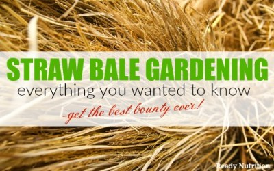 Straw Bale Gardening: Everything You Wanted to Know for the Best Bounty Ever