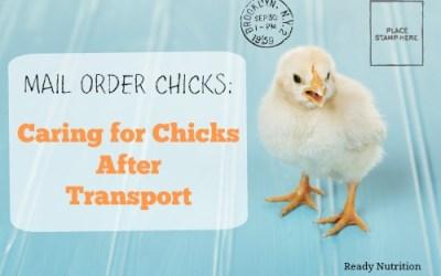 Mail Order Chicks: Caring for Chicks After Transport