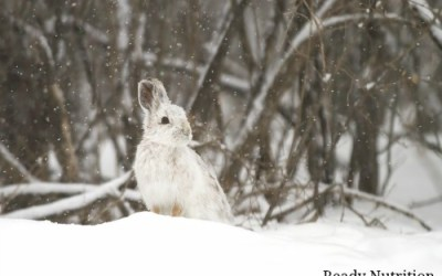 4 Food Sources You Can Find in the Dead of Winter