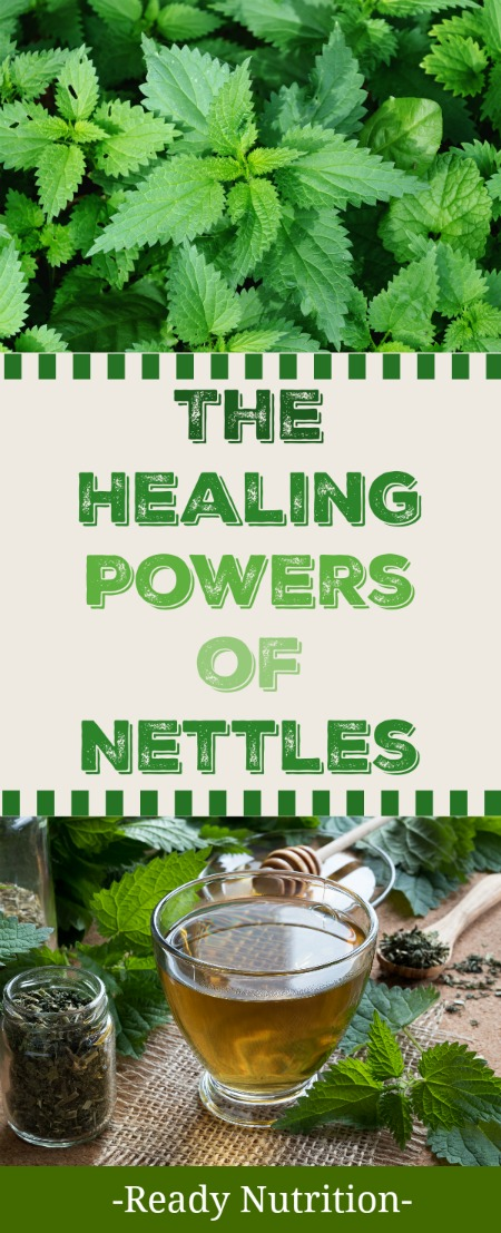 Nettles have amazing health benefits! Learn all about the nettles healing powers here.