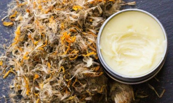 "Arnica is an herbal medicine known for its healing properties. Whether your entire basement is filled with canned foods and enough water to survive the apocalypse or you simply keep a first aid kit in your car ""just in case,"" you should consider adding arnica salve to your emergency kit."