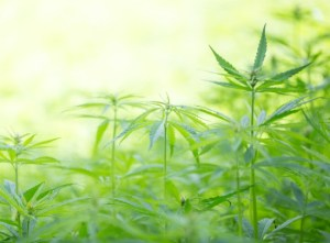 If there is such a thing as a wonder plant, hemp is it. Let's take a look at a few ways you can start using hemp today.