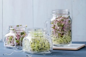 Finding the right supplements can be a tricky endeavor. But, what if I told you it's really not? In fact, you could easily grow your own vitamins naturally from the convenience of your kitchen window. What am I talking about? I'm talking about sprouts. #ReadyGardens #GrowYourOwn #NoGMO #HealthyLiving