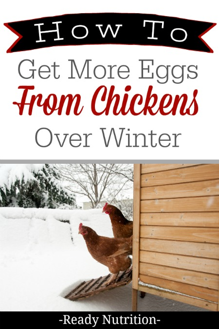 During winter, it is entirely possible to see your hen's egg production slow down, but there are things you can do to ensure a steady supply of eggs. #ReadyNutrition