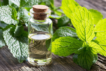 Lemon Balm: The Natural Benefits, Remedies, And Uses