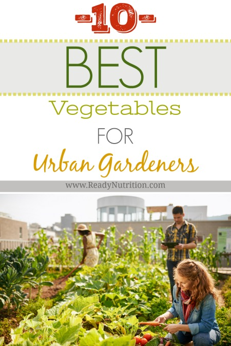 Before you know it, your urban oasis will be bursting with wholesome produce and you'll wonder why you waited so long to start growing your own food.