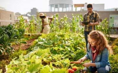 10 Best Vegetables for Urban Gardeners