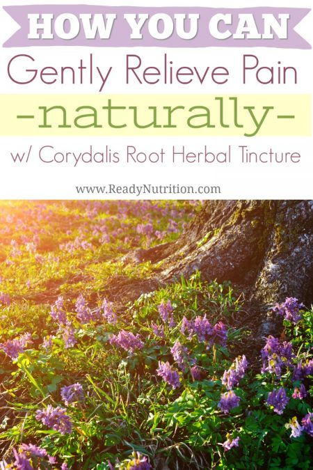 Ready Nutrition herbal tinctures help those who are turning back to nature to aid their body and mood. Corydalis root is one of those herbal remedies and has been shown to be useful in the gentle relief of pain.