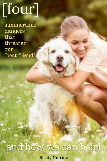 While these common summer dangers are scary and can be life-threatening, being aware of them and taking the appropriate action when something goes wrong could save your best friend's life.