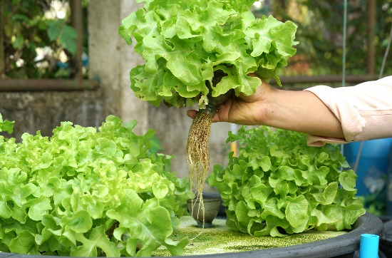 Hydroponics: The Good, The Bad, & The Necessary Equipment