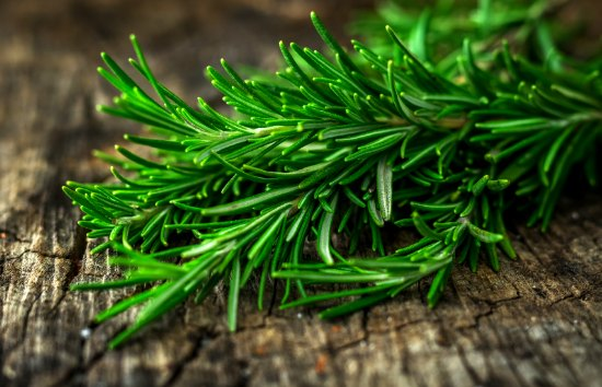 Health Benefits of Rosemary & How To Grow Rosemary in Winter