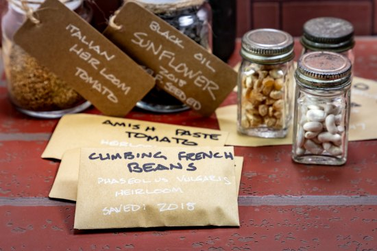 How To Make Your Own Seed Bank