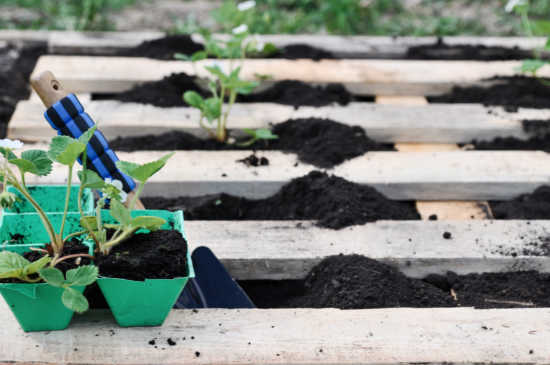 How To Start a Pallet Garden and What Vegetables Grow Best With It?