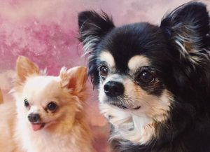 Chihuahua in pair