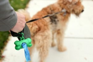 Airedale Terrier poop bag
