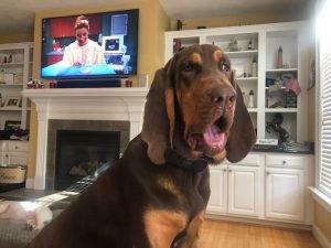 Bloodhound TV
