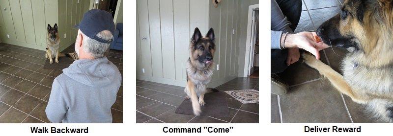 GSD Come Command
