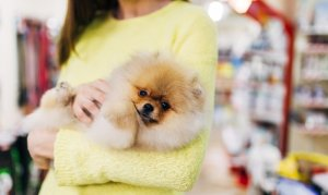 woman holding a pomeranian in her arms