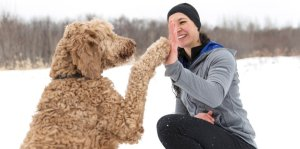 training with a goldendoodle