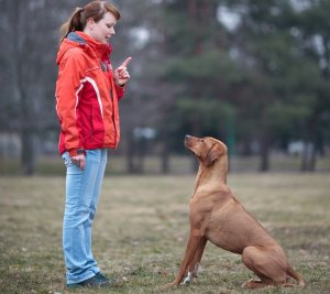 Training your Rhodesian Ridgeback