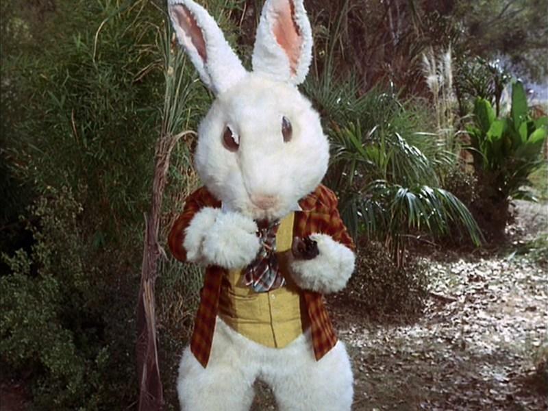 SL 5 White Rabbit