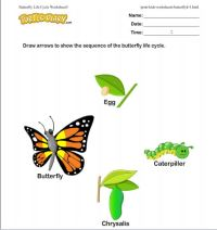 Life Cycle Of A Butterfly Worksheet