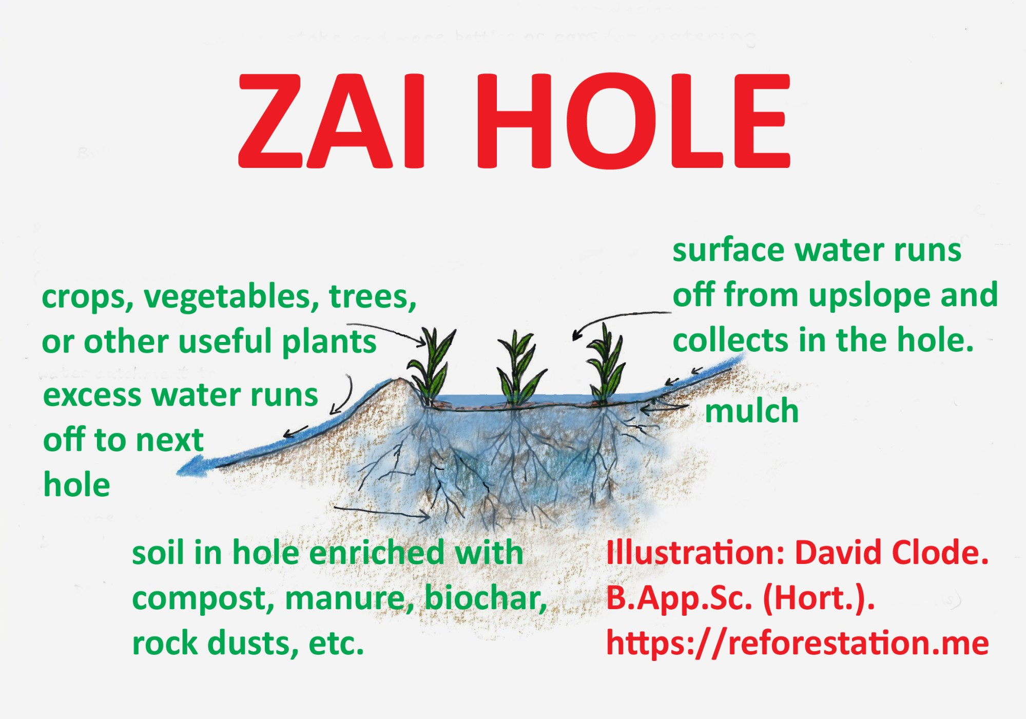 hight resolution of zai hole invented in africa the space up slope from the hole acts as a catchment for water which then flows into the hole only really needed in dry