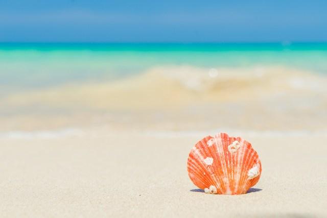 Shelling on Naples beaches