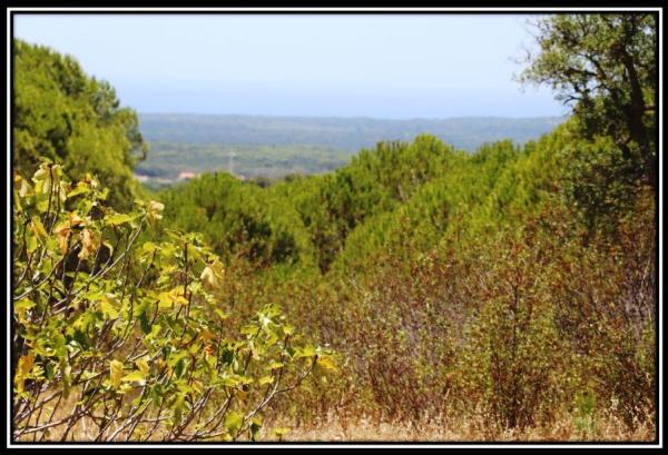 6 Hectares hillside Meldies with Sea-view