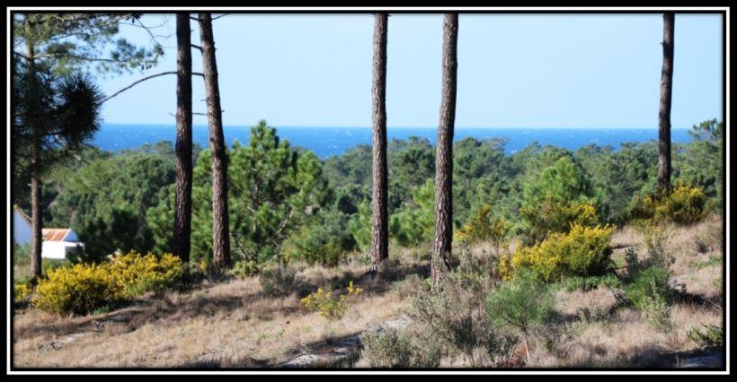 Sea View Plot for sale for New Home Pego Beach Comporta